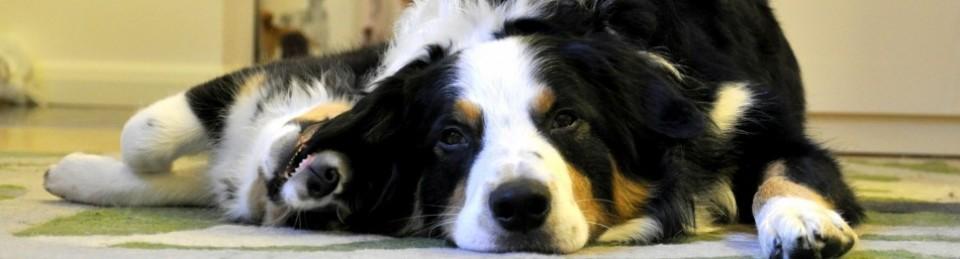 Heidis Hundideologi